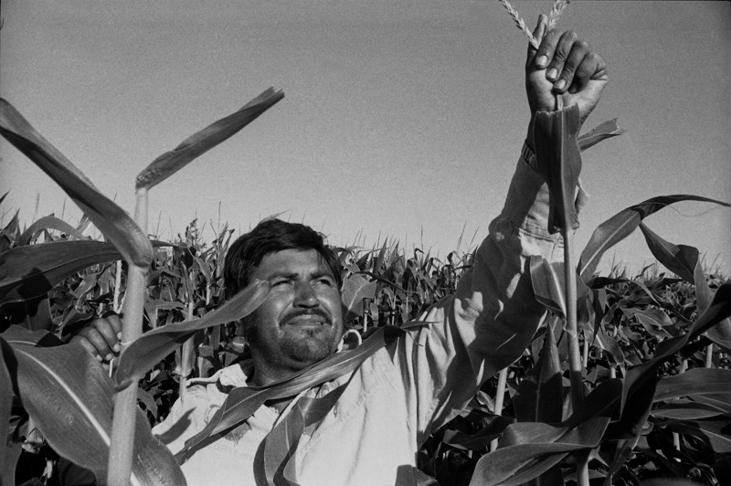 Immigrants and undocumented workers have often contributed to the U.S. economy as farm workers.